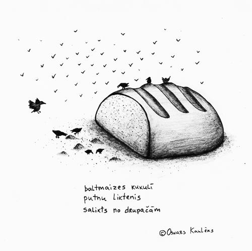 baltmaizes kukulī / putnu liktenis / salikts no drupačām (c) Oskars Kaulēns